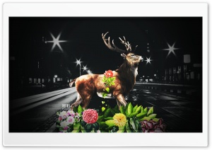 Last Deer  by Pacolix HD Wide Wallpaper for Widescreen