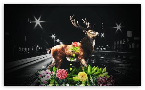 Last Deer  by Pacolix ❤ 4K UHD Wallpaper for Wide 5:3 Widescreen WGA ; 4K UHD 16:9 Ultra High Definition 2160p 1440p 1080p 900p 720p ; Standard 4:3 Fullscreen UXGA XGA SVGA ; iPad 1/2/Mini ; Mobile 4:3 5:3 16:9 5:4 - UXGA XGA SVGA WGA 2160p 1440p 1080p 900p 720p QSXGA SXGA ;