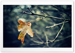 Last Leaf, Autumn HD Wide Wallpaper for Widescreen