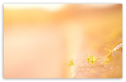 last_light-t2.jpg