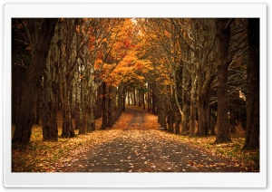 Late Autumn HD Wide Wallpaper for Widescreen
