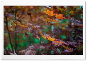 Late Summer Foliage HD Wide Wallpaper for Widescreen