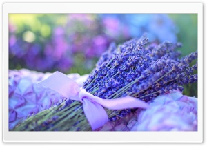 Lavender Bouquet HD Wide Wallpaper for Widescreen