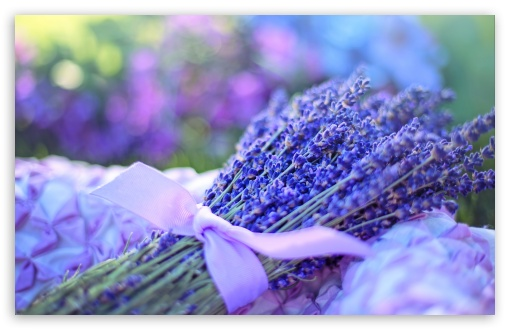 Lavender Bouquet ❤ 4K UHD Wallpaper for Wide 16:10 5:3 Widescreen WHXGA WQXGA WUXGA WXGA WGA ; UltraWide 21:9 24:10 ; 4K UHD 16:9 Ultra High Definition 2160p 1440p 1080p 900p 720p ; UHD 16:9 2160p 1440p 1080p 900p 720p ; Standard 4:3 5:4 3:2 Fullscreen UXGA XGA SVGA QSXGA SXGA DVGA HVGA HQVGA ( Apple PowerBook G4 iPhone 4 3G 3GS iPod Touch ) ; Tablet 1:1 ; iPad 1/2/Mini ; Mobile 4:3 5:3 3:2 16:9 5:4 - UXGA XGA SVGA WGA DVGA HVGA HQVGA ( Apple PowerBook G4 iPhone 4 3G 3GS iPod Touch ) 2160p 1440p 1080p 900p 720p QSXGA SXGA ;