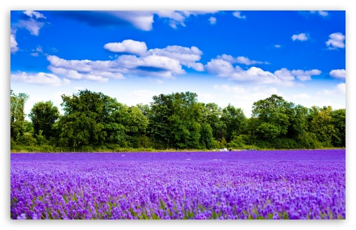 Lavender Field HD wallpaper for Standard 4:3 5:4 Fullscreen UXGA XGA SVGA QSXGA SXGA ; Wide 16:10 5:3 Widescreen WHXGA WQXGA WUXGA WXGA WGA ; HD 16:9 High Definition WQHD QWXGA 1080p 900p 720p QHD nHD ; Other 3:2 DVGA HVGA HQVGA devices ( Apple PowerBook G4 iPhone 4 3G 3GS iPod Touch ) ; Mobile VGA WVGA iPhone iPad PSP Phone - VGA QVGA Smartphone ( PocketPC GPS iPod Zune BlackBerry HTC Samsung LG Nokia Eten Asus ) WVGA WQVGA Smartphone ( HTC Samsung Sony Ericsson LG Vertu MIO ) HVGA Smartphone ( Apple iPhone iPod BlackBerry HTC Samsung Nokia ) Sony PSP Zune HD Zen ; Tablet 2 Android ; Dual 4:3 5:4 16:10 5:3 16:9 UXGA XGA SVGA QSXGA SXGA WHXGA WQXGA WUXGA WXGA WGA WQHD QWXGA 1080p 900p 720p QHD nHD ;