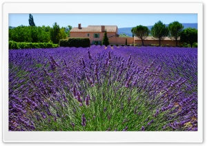 Lavender Field, Provencal House HD Wide Wallpaper for Widescreen