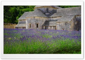Lavender Garden, Monastery HD Wide Wallpaper for Widescreen