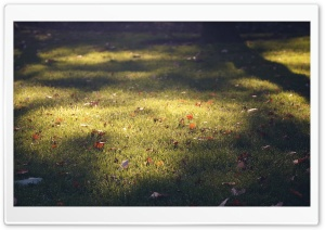 Lawn HD Wide Wallpaper for Widescreen