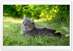 Lazy Cat Outdoors HD Wide Wallpaper for Widescreen