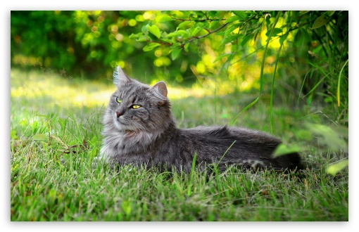 Lazy Cat Outdoors HD wallpaper for Wide 16:10 5:3 Widescreen WHXGA WQXGA WUXGA WXGA WGA ; HD 16:9 High Definition WQHD QWXGA 1080p 900p 720p QHD nHD ; Standard 4:3 5:4 3:2 Fullscreen UXGA XGA SVGA QSXGA SXGA DVGA HVGA HQVGA devices ( Apple PowerBook G4 iPhone 4 3G 3GS iPod Touch ) ; Tablet 1:1 ; iPad 1/2/Mini ; Mobile 4:3 5:3 3:2 16:9 5:4 - UXGA XGA SVGA WGA DVGA HVGA HQVGA devices ( Apple PowerBook G4 iPhone 4 3G 3GS iPod Touch ) WQHD QWXGA 1080p 900p 720p QHD nHD QSXGA SXGA ; Dual 4:3 5:4 UXGA XGA SVGA QSXGA SXGA ;