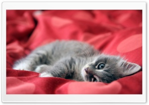 Lazy Kitty HD Wide Wallpaper for Widescreen