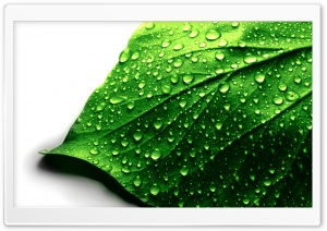 Leaf HD Wide Wallpaper for Widescreen