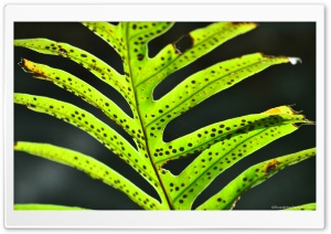 Leaf Ultra HD Wallpaper for 4K UHD Widescreen desktop, tablet & smartphone