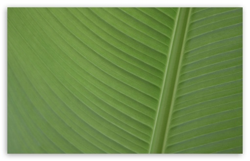 Leaf ❤ 4K UHD Wallpaper for Wide 16:10 5:3 Widescreen WHXGA WQXGA WUXGA WXGA WGA ; 4K UHD 16:9 Ultra High Definition 2160p 1440p 1080p 900p 720p ; Standard 4:3 5:4 3:2 Fullscreen UXGA XGA SVGA QSXGA SXGA DVGA HVGA HQVGA ( Apple PowerBook G4 iPhone 4 3G 3GS iPod Touch ) ; Tablet 1:1 ; iPad 1/2/Mini ; Mobile 4:3 5:3 3:2 16:9 5:4 - UXGA XGA SVGA WGA DVGA HVGA HQVGA ( Apple PowerBook G4 iPhone 4 3G 3GS iPod Touch ) 2160p 1440p 1080p 900p 720p QSXGA SXGA ;