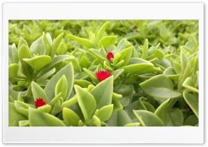 Leaf Ultra HD Wallpaper for 4K UHD Widescreen desktop, tablet & smartphone