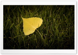 Leaf HD Wide Wallpaper for 4K UHD Widescreen desktop & smartphone