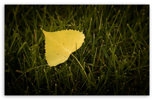 Leaf ❤ 4K UHD Wallpaper for Wide 16:10 5:3 Widescreen WHXGA WQXGA WUXGA WXGA WGA ; UltraWide 21:9 24:10 ; 4K UHD 16:9 Ultra High Definition 2160p 1440p 1080p 900p 720p ; UHD 16:9 2160p 1440p 1080p 900p 720p ; Standard 4:3 5:4 3:2 Fullscreen UXGA XGA SVGA QSXGA SXGA DVGA HVGA HQVGA ( Apple PowerBook G4 iPhone 4 3G 3GS iPod Touch ) ; Smartphone 16:9 3:2 5:3 2160p 1440p 1080p 900p 720p DVGA HVGA HQVGA ( Apple PowerBook G4 iPhone 4 3G 3GS iPod Touch ) WGA ; Tablet 1:1 ; iPad 1/2/Mini ; Mobile 4:3 5:3 3:2 16:9 5:4 - UXGA XGA SVGA WGA DVGA HVGA HQVGA ( Apple PowerBook G4 iPhone 4 3G 3GS iPod Touch ) 2160p 1440p 1080p 900p 720p QSXGA SXGA ;