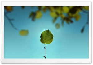 Leaf Against The Blue Sky HD Wide Wallpaper for Widescreen