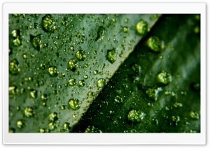 Leaf And Water Drops HD Wide Wallpaper for Widescreen