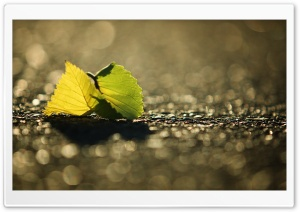 Leaf, Bokeh HD Wide Wallpaper for Widescreen