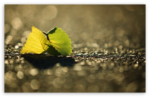 Leaf, Bokeh ❤ 4K UHD Wallpaper for Wide 16:10 5:3 Widescreen WHXGA WQXGA WUXGA WXGA WGA ; 4K UHD 16:9 Ultra High Definition 2160p 1440p 1080p 900p 720p ; Standard 4:3 5:4 3:2 Fullscreen UXGA XGA SVGA QSXGA SXGA DVGA HVGA HQVGA ( Apple PowerBook G4 iPhone 4 3G 3GS iPod Touch ) ; Tablet 1:1 ; iPad 1/2/Mini ; Mobile 4:3 5:3 3:2 16:9 5:4 - UXGA XGA SVGA WGA DVGA HVGA HQVGA ( Apple PowerBook G4 iPhone 4 3G 3GS iPod Touch ) 2160p 1440p 1080p 900p 720p QSXGA SXGA ; Dual 16:10 5:3 16:9 4:3 5:4 WHXGA WQXGA WUXGA WXGA WGA 2160p 1440p 1080p 900p 720p UXGA XGA SVGA QSXGA SXGA ;