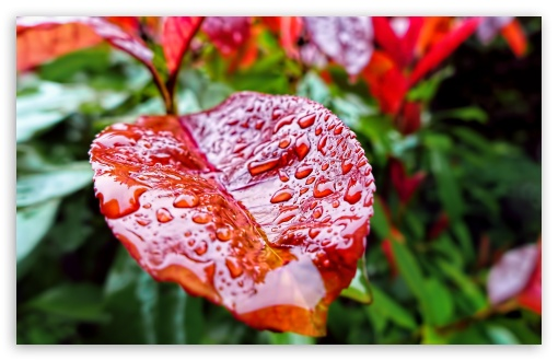 Leaf Drops ❤ 4K UHD Wallpaper for Wide 16:10 5:3 Widescreen WHXGA WQXGA WUXGA WXGA WGA ; 4K UHD 16:9 Ultra High Definition 2160p 1440p 1080p 900p 720p ; UHD 16:9 2160p 1440p 1080p 900p 720p ; Standard 4:3 5:4 3:2 Fullscreen UXGA XGA SVGA QSXGA SXGA DVGA HVGA HQVGA ( Apple PowerBook G4 iPhone 4 3G 3GS iPod Touch ) ; Tablet 1:1 ; iPad 1/2/Mini ; Mobile 4:3 5:3 3:2 16:9 5:4 - UXGA XGA SVGA WGA DVGA HVGA HQVGA ( Apple PowerBook G4 iPhone 4 3G 3GS iPod Touch ) 2160p 1440p 1080p 900p 720p QSXGA SXGA ; Dual 5:4 QSXGA SXGA ;