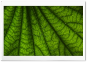 Leaf Macro HD Wide Wallpaper for Widescreen
