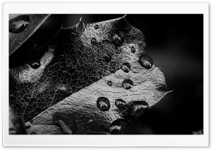 Leaf Macro, Black And White HD Wide Wallpaper for Widescreen