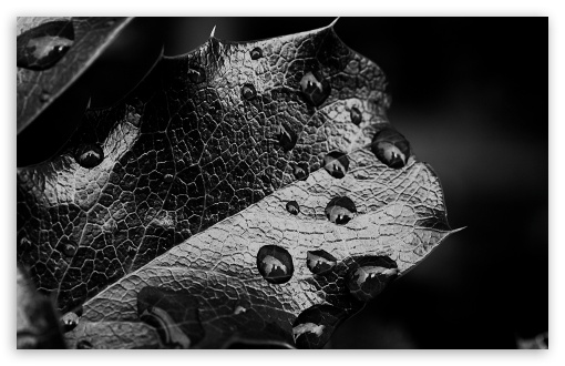 Leaf Macro, Black And White HD wallpaper for Wide 16:10 5:3 Widescreen WHXGA WQXGA WUXGA WXGA WGA ; HD 16:9 High Definition WQHD QWXGA 1080p 900p 720p QHD nHD ; Standard 4:3 5:4 3:2 Fullscreen UXGA XGA SVGA QSXGA SXGA DVGA HVGA HQVGA devices ( Apple PowerBook G4 iPhone 4 3G 3GS iPod Touch ) ; Tablet 1:1 ; iPad 1/2/Mini ; Mobile 4:3 5:3 3:2 5:4 - UXGA XGA SVGA WGA DVGA HVGA HQVGA devices ( Apple PowerBook G4 iPhone 4 3G 3GS iPod Touch ) QSXGA SXGA ;