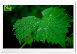 Leaf Of Life HD Wide Wallpaper for Widescreen