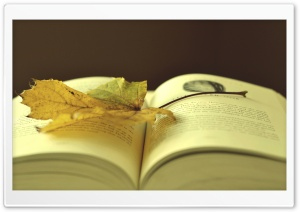 Leaf On A Book HD Wide Wallpaper for Widescreen