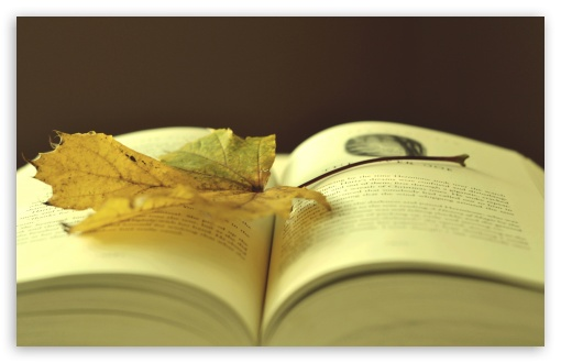 Download Leaf On A Book HD Wallpaper