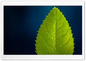 Leaf On Blue Background HD Wide Wallpaper for Widescreen