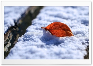 Leaf On Snow HD Wide Wallpaper for Widescreen