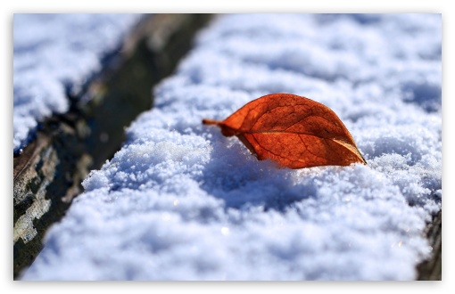 Leaf On Snow HD wallpaper for Wide 16:10 5:3 Widescreen WHXGA WQXGA WUXGA WXGA WGA ; HD 16:9 High Definition WQHD QWXGA 1080p 900p 720p QHD nHD ; Standard 4:3 5:4 3:2 Fullscreen UXGA XGA SVGA QSXGA SXGA DVGA HVGA HQVGA devices ( Apple PowerBook G4 iPhone 4 3G 3GS iPod Touch ) ; Tablet 1:1 ; iPad 1/2/Mini ; Mobile 4:3 5:3 3:2 16:9 5:4 - UXGA XGA SVGA WGA DVGA HVGA HQVGA devices ( Apple PowerBook G4 iPhone 4 3G 3GS iPod Touch ) WQHD QWXGA 1080p 900p 720p QHD nHD QSXGA SXGA ; Dual 16:10 5:3 16:9 4:3 5:4 WHXGA WQXGA WUXGA WXGA WGA WQHD QWXGA 1080p 900p 720p QHD nHD UXGA XGA SVGA QSXGA SXGA ;