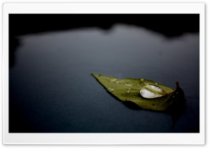 Leaf On Water HD Wide Wallpaper for Widescreen