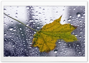 Leaf On Wet Window HD Wide Wallpaper for Widescreen