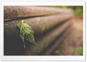 Leaf On Wooden Fence HD Wide Wallpaper for Widescreen
