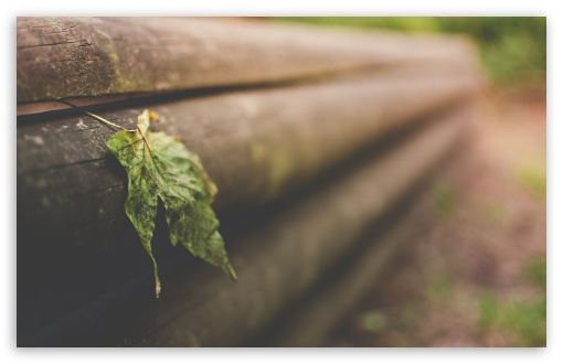 Leaf On Wooden Fence ❤ 4K UHD Wallpaper for Wide 16:10 5:3 Widescreen WHXGA WQXGA WUXGA WXGA WGA ; 4K UHD 16:9 Ultra High Definition 2160p 1440p 1080p 900p 720p ; Standard 4:3 5:4 3:2 Fullscreen UXGA XGA SVGA QSXGA SXGA DVGA HVGA HQVGA ( Apple PowerBook G4 iPhone 4 3G 3GS iPod Touch ) ; Tablet 1:1 ; iPad 1/2/Mini ; Mobile 4:3 5:3 3:2 16:9 5:4 - UXGA XGA SVGA WGA DVGA HVGA HQVGA ( Apple PowerBook G4 iPhone 4 3G 3GS iPod Touch ) 2160p 1440p 1080p 900p 720p QSXGA SXGA ; Dual 4:3 5:4 UXGA XGA SVGA QSXGA SXGA ;