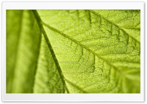 Leaf Texture Macro HD Wide Wallpaper for Widescreen