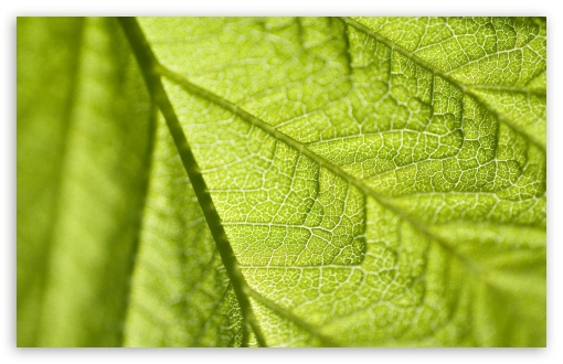 Leaf Texture Macro ❤ 4K UHD Wallpaper for Wide 16:10 5:3 Widescreen WHXGA WQXGA WUXGA WXGA WGA ; 4K UHD 16:9 Ultra High Definition 2160p 1440p 1080p 900p 720p ; Standard 4:3 5:4 3:2 Fullscreen UXGA XGA SVGA QSXGA SXGA DVGA HVGA HQVGA ( Apple PowerBook G4 iPhone 4 3G 3GS iPod Touch ) ; iPad 1/2/Mini ; Mobile 4:3 5:3 3:2 16:9 5:4 - UXGA XGA SVGA WGA DVGA HVGA HQVGA ( Apple PowerBook G4 iPhone 4 3G 3GS iPod Touch ) 2160p 1440p 1080p 900p 720p QSXGA SXGA ;