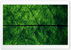 Leaf Veins HD Wide Wallpaper for Widescreen