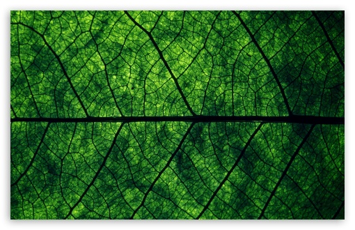 Leaf Veins HD wallpaper for Wide 16:10 5:3 Widescreen WHXGA WQXGA WUXGA WXGA WGA ; HD 16:9 High Definition WQHD QWXGA 1080p 900p 720p QHD nHD ; Standard 4:3 5:4 3:2 Fullscreen UXGA XGA SVGA QSXGA SXGA DVGA HVGA HQVGA devices ( Apple PowerBook G4 iPhone 4 3G 3GS iPod Touch ) ; iPad 1/2/Mini ; Mobile 4:3 5:3 3:2 16:9 5:4 - UXGA XGA SVGA WGA DVGA HVGA HQVGA devices ( Apple PowerBook G4 iPhone 4 3G 3GS iPod Touch ) WQHD QWXGA 1080p 900p 720p QHD nHD QSXGA SXGA ;
