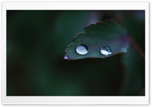 Leaf Water Drops, Macro HD Wide Wallpaper for Widescreen
