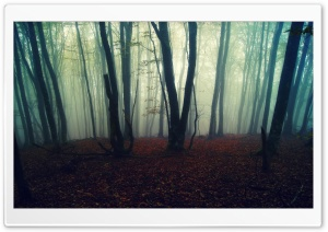 Leafless Forest HD Wide Wallpaper for Widescreen