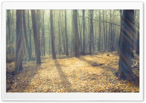 Leafless Forest And Sunlight HD Wide Wallpaper for Widescreen