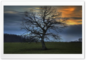 Leafless Tree, HDR HD Wide Wallpaper for Widescreen