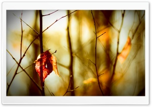 Leafless Twigs HD Wide Wallpaper for Widescreen