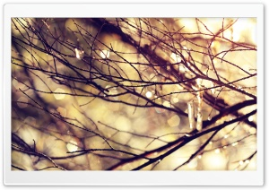 Leafless Twigs And Branches HD Wide Wallpaper for Widescreen