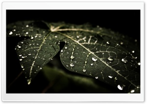 Leafy Droplets HD Wide Wallpaper for Widescreen
